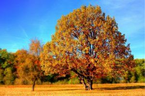 Motorradfahren im Herbst – Frischer Morgentau & bunte Blätter